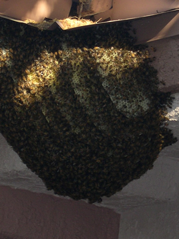 2 Lots of bees.jpg
